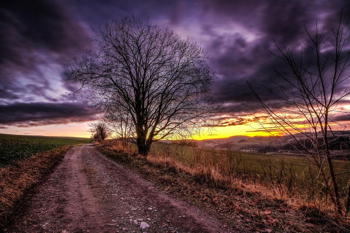 Фотографии поле, деревья на телефон