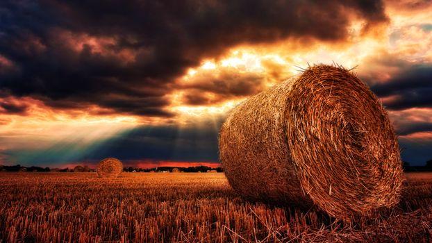 Фото бесплатно сено, поле, пшеница