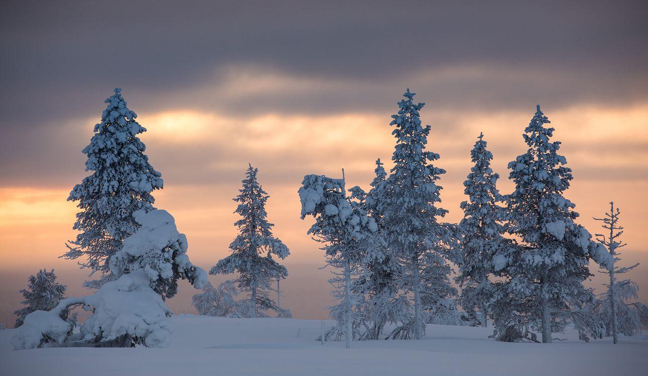 Картинка Finland, Lapland, Финляндия, Лапландия, зима, снег, деревья, закат, пейзаж на рабочий стол. Скачать фото обои пейзажи