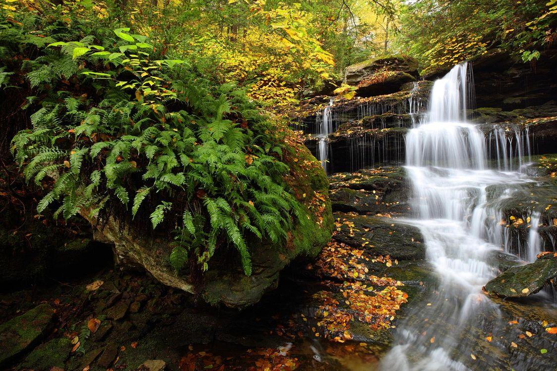 Фото бесплатно Государственный парк Рикеттс Глен, Соединенные Штаты, Пенсильвания - на рабочий стол