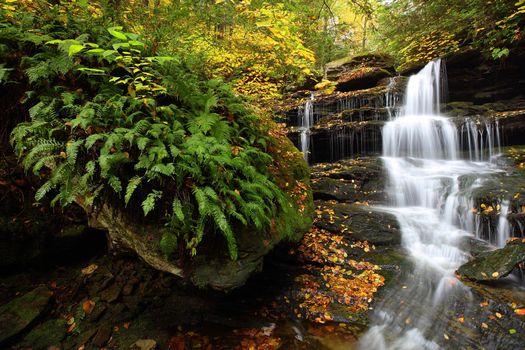 Бесплатные фото Государственный парк Рикеттс Глен,Соединенные Штаты,Пенсильвания,осень,река,скалы,водопад,деревья,пейзаж