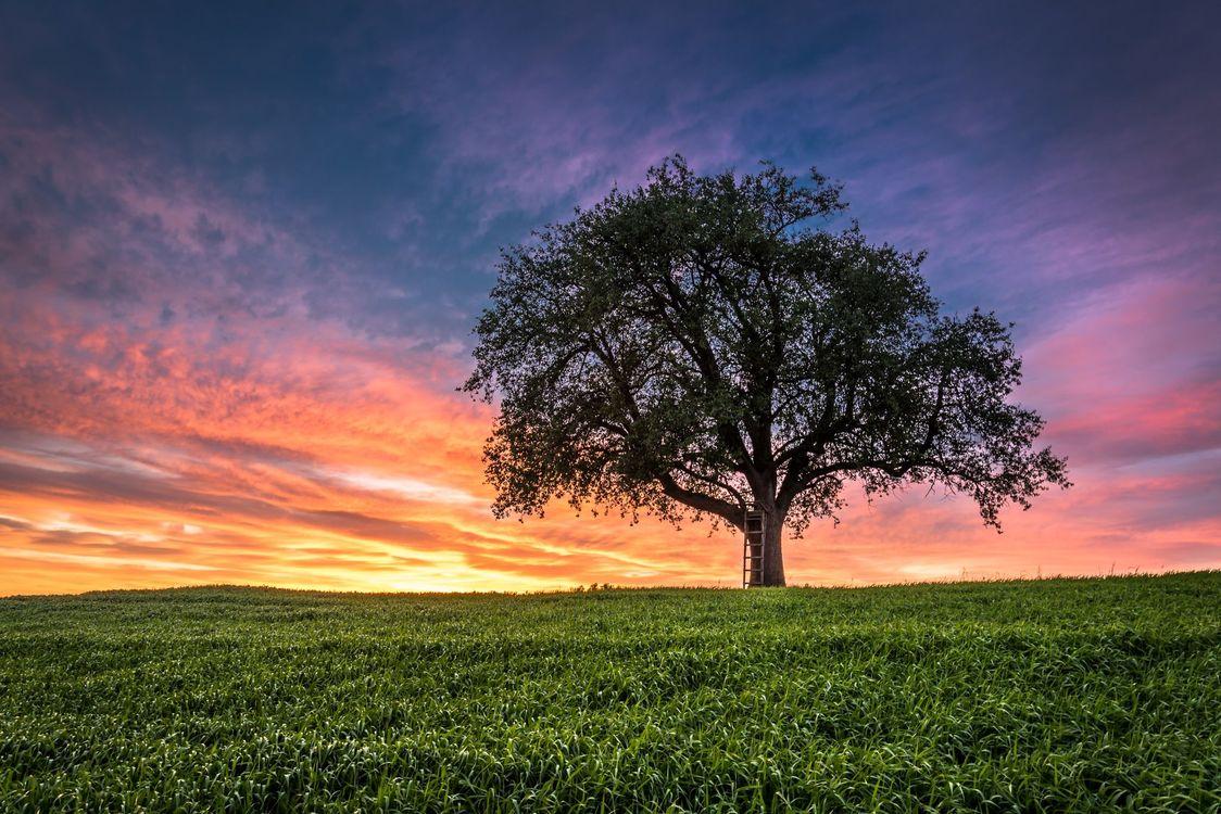 Фото бесплатно закат, поле, дерево, пейзаж, пейзажи