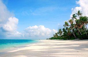 Бесплатные фото Мальдивы, тропики, море, остров, пляж, пальмы