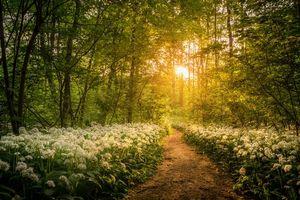 Бесплатные фото лес, деревья, тропинка, цветы, природа, пейзаж