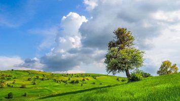 Бесплатные фото поле, холмы, деревья, пейзаж