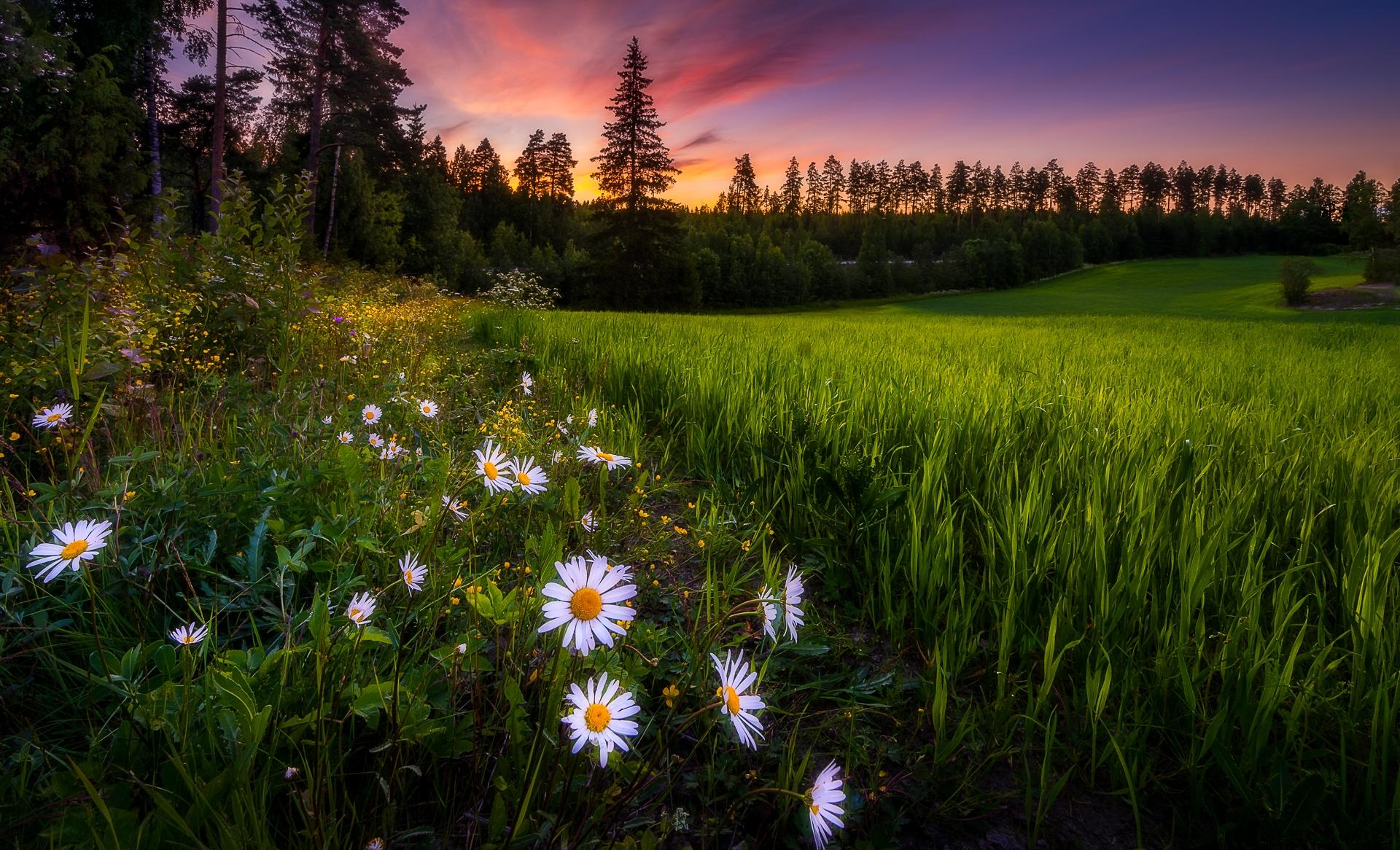 Обои закат, поле, деревья, трава