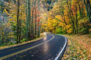 Бесплатные фото Smoky Mountains National Park,Грейт Смоки Маунтинс Парк,штат Теннесси,осень,дорога,лес,деревья