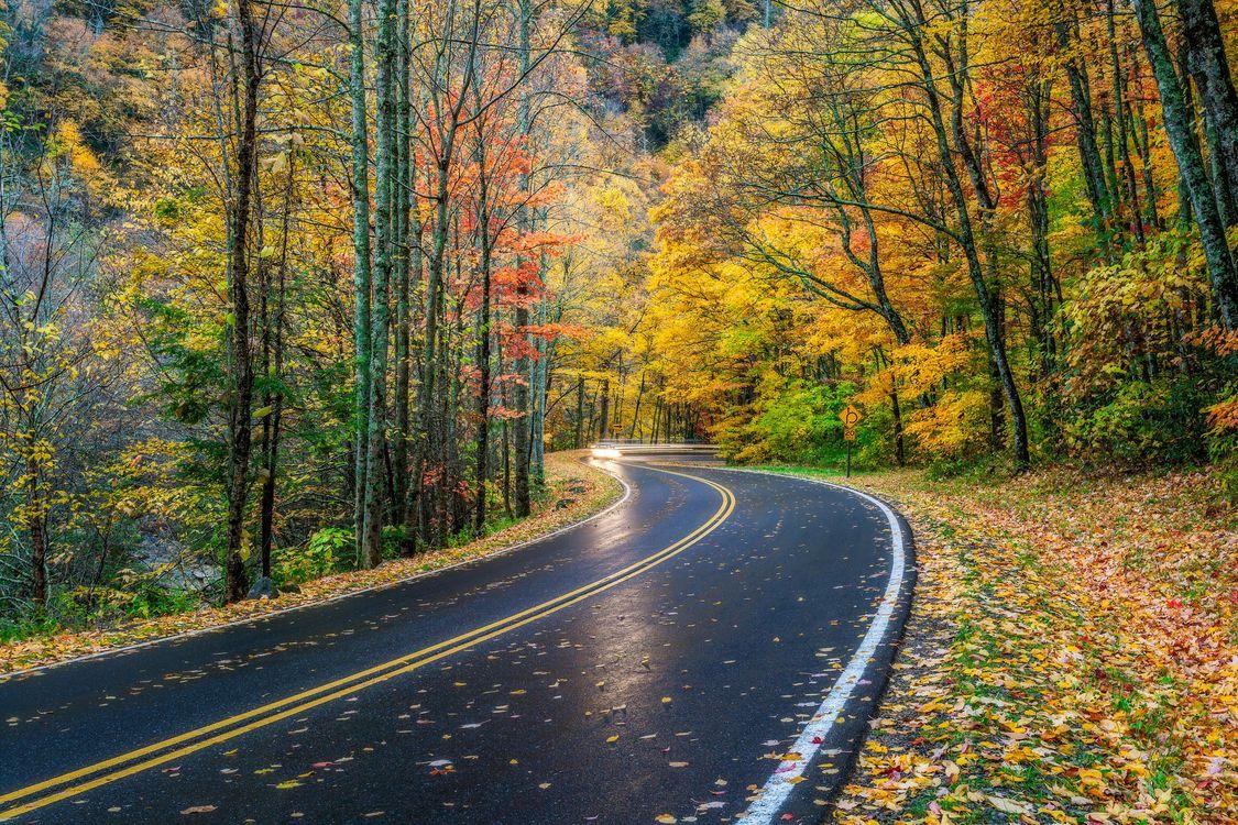 Фото бесплатно пейзаж, парк Грейт Смоки Маунтинс, дорога - на рабочий стол