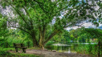 Заставки Берлин,парк,озеро,лавочка,деревья,пейзаж