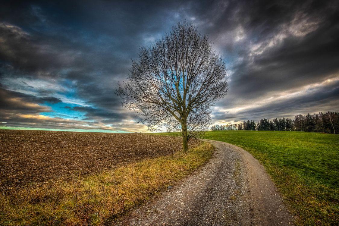 Бесплатно деревья, поле фото горячие
