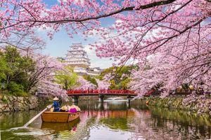 Фото бесплатно Япония, цветок, весна