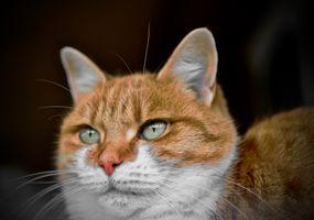 Бесплатные фото кошка,зеленые глаза,животные