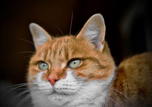 Фото бесплатно кошка, зеленые глаза, животные