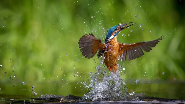 Фото бесплатно зимородок, всплеск воды, перо