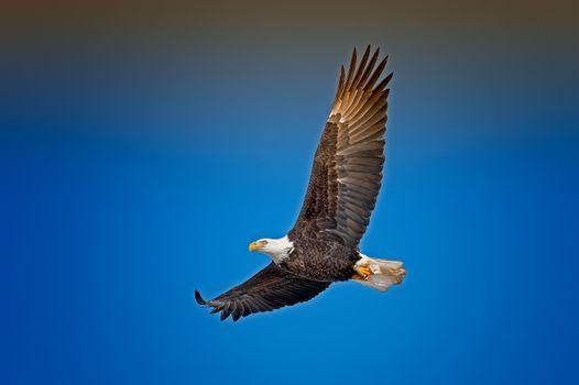 Фото бесплатно птицы, небо, крылья
