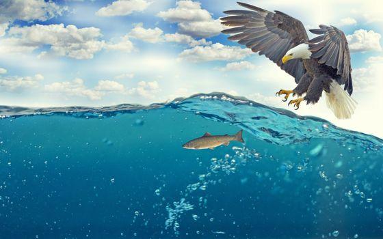 Photo free eagle, hunting, ocean