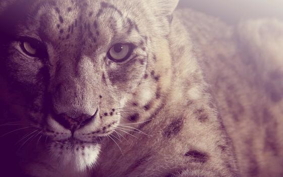 Photo free face, cat, animals