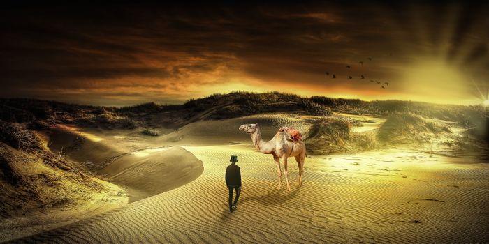 Фото бесплатно пустыня, верблюд, каракум