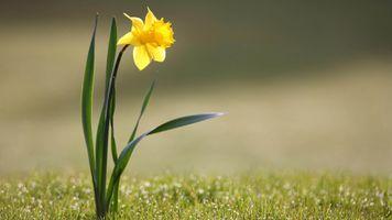Фото бесплатно солнечный свет, природа, трава