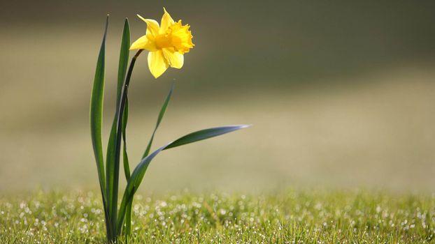 Photo free sunlight, nature, grass