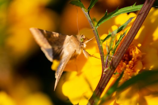 Moth on a flower · free photo