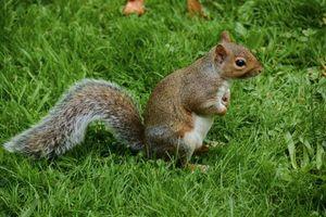 Фото бесплатно белка, поза, животное