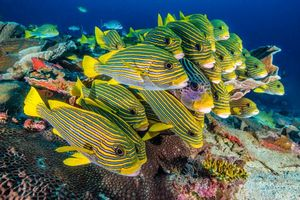Бесплатные фото Дайвинг, Природа, Национальный парк, Индонезия, стая рыб, подводный мир, море