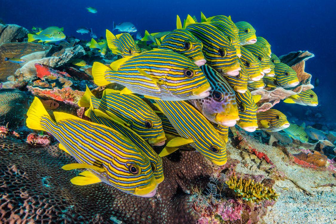 Обои подводный мир, природа, национальный парк картинки на телефон