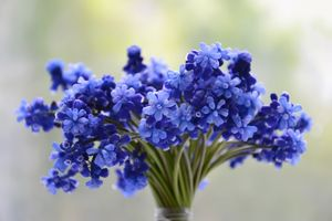 Photo free flowers, bouquet, blue