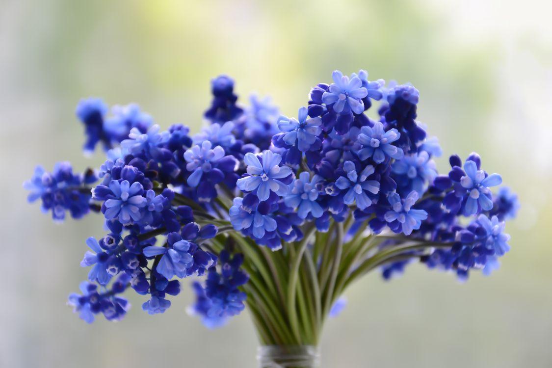 Free photo flowers, bouquet, blue - to desktop