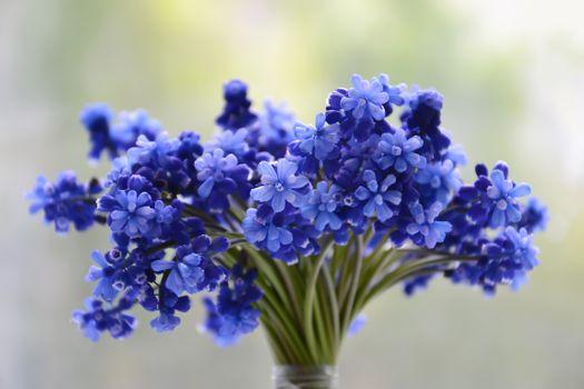 Фото бесплатно цветы, букет, синий
