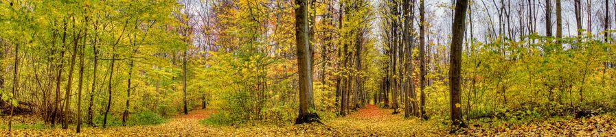 Заставки лес, дорога, панорама