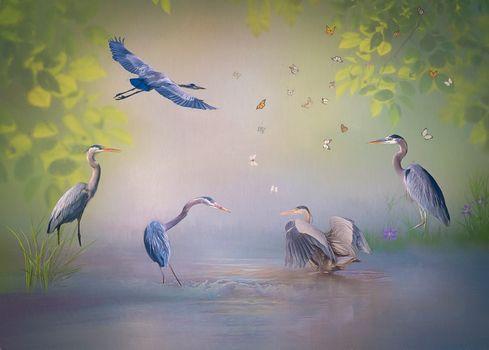 Photo free herons, birds, butterflies