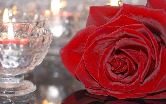 Фото бесплатно красный, стекло, роза