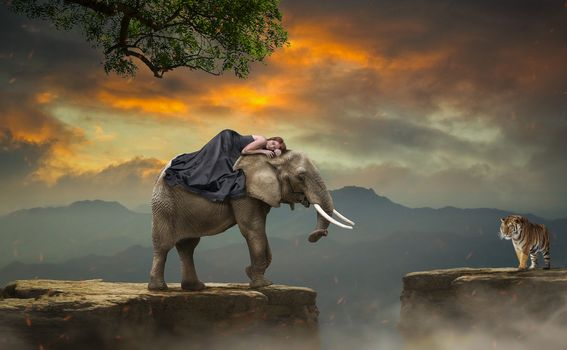 Слон и девушка спящая