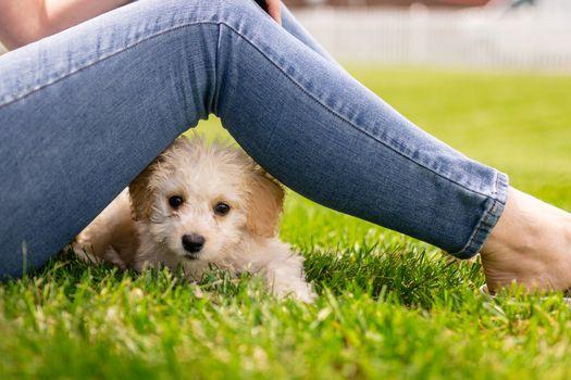 Photo free animals, dogs, legs