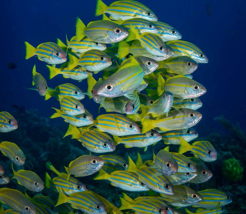 Обои подводный мир, море, рыба картинки на телефон