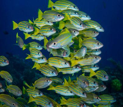 Фото бесплатно подводный мир, море, рыба