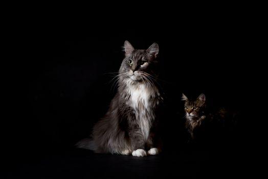 Заставки поза, животное, черный фон