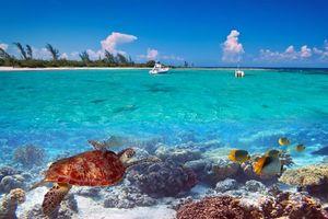 Фото бесплатно море, тропики, остров, яхты, природа
