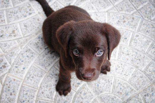 Фото бесплатно собака, порода собак, животное