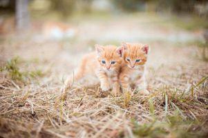 Фото бесплатно животные, котёнок, кошка