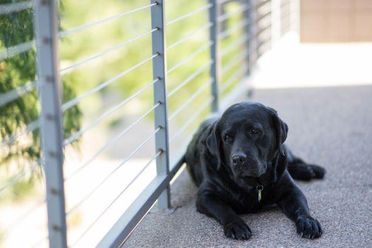Фото бесплатно лабрадор ретривер, черный, щенок