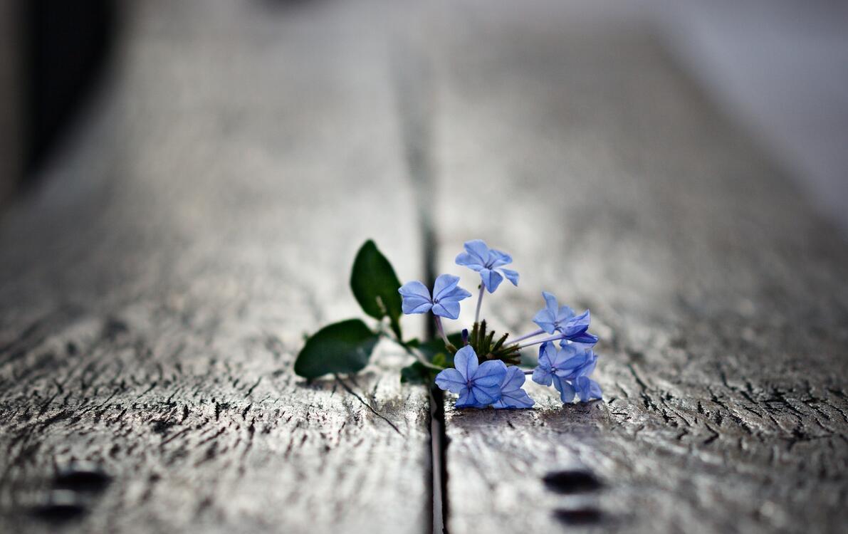 Фото макро обои голубые цветы лепестки - бесплатные картинки на Fonwall