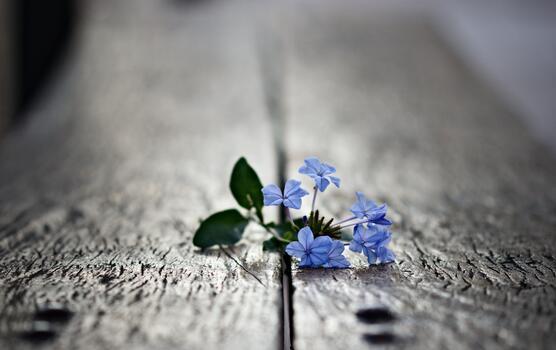 Фото бесплатно макро, обои голубые цветы, лепестки