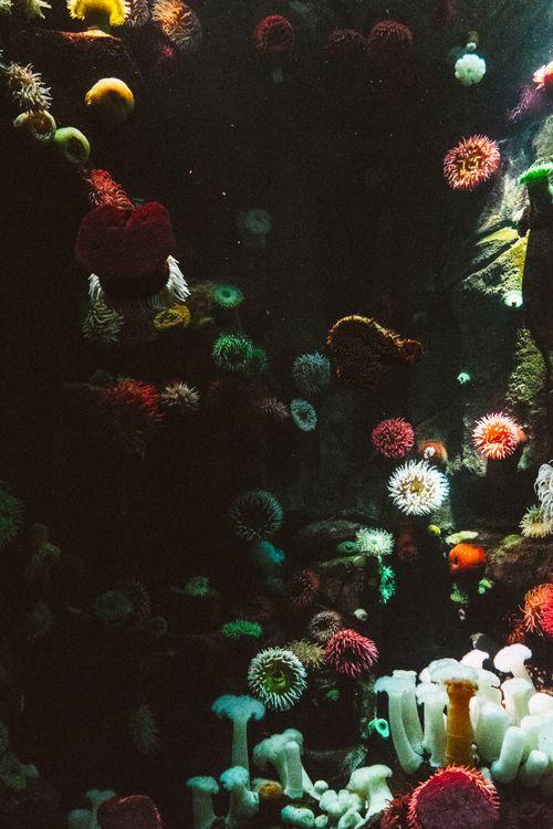 Фото океан цветок подводный - бесплатные картинки на Fonwall