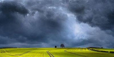 Бесплатные фото поле, тучи, деревья, пейзаж
