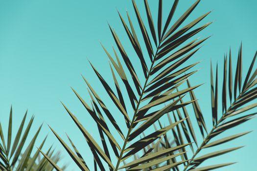 Заставки ясное небо, ветви, дерево
