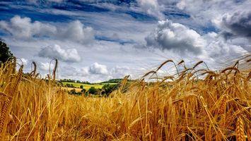 Бесплатные фото поле,колосья,пейзаж