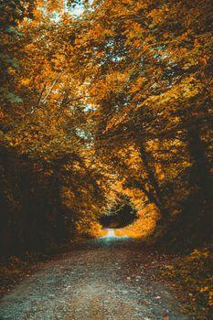 Photo free autumn, foliage, leaves